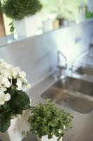 白い花(ベゴニア)のあるキッチン
