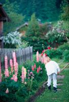 庭にいる女の子 21022001397| 写真素材・ストックフォト・画像・イラスト素材|アマナイメージズ