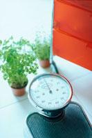 ヘルスメーターと植物