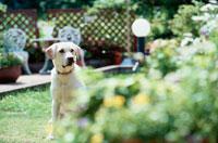 庭にいる白い犬