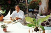 船の模型を作る男性と観葉植物