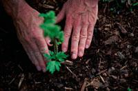 苗木を植える手 21022002349| 写真素材・ストックフォト・画像・イラスト素材|アマナイメージズ