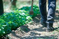 農具を手に畑を歩く人の足もと
