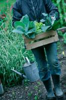 木箱に入った収穫野菜を運ぶ人