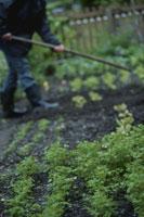 菜園を耕す人