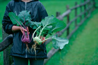 収穫した野菜を両手に持つ人