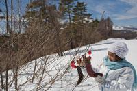 木に飾ったクリスマス飾りと女の子 21022002787A| 写真素材・ストックフォト・画像・イラスト素材|アマナイメージズ