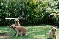 ブランコと3匹の犬