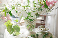 白いカンパニュラの盛り花