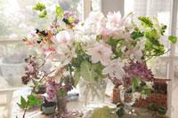 桜色のアルストロメリア