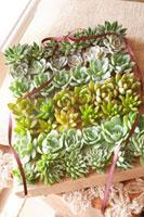 ボックスに並んだ多肉植物