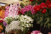 バラや芍薬が売られているマーケットの花屋