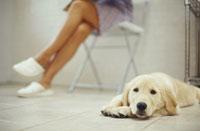 床で眠る犬(ゴールデンレトリーバー)と女性