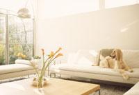 ソファに座った犬 21028001333| 写真素材・ストックフォト・画像・イラスト素材|アマナイメージズ