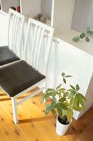 観葉植物と2脚の椅子
