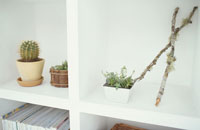 サボテンと植物