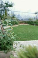 屋上の庭 21028002227| 写真素材・ストックフォト・画像・イラスト素材|アマナイメージズ