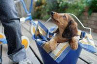 青いバケツに入った子犬