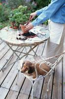 苗木を植えかえている女性と犬