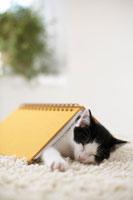 ノートの下で眠る子猫