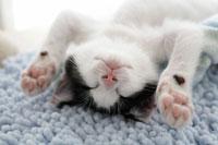 仰向けで眠る子猫