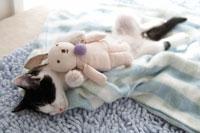 ウサギのぬいぐるみを抱いて眠る子猫