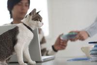 机の上に座る猫とノートパソコンをする人