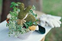 鉢植え 21028004493| 写真素材・ストックフォト・画像・イラスト素材|アマナイメージズ