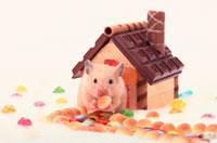 お菓子の家とハムスター