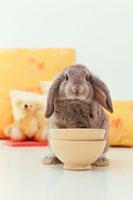 カフェオレカップとグレーのロップイヤーウサギ
