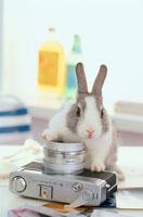 カメラとミニウサギ