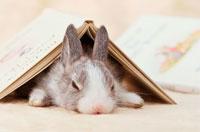 開いた本の下で眠るミニウサギ