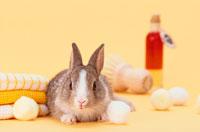 コットンやクロスとミニウサギ