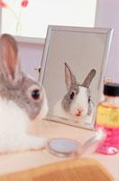 鏡の前のミニウサギ