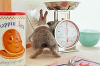 キッチンの調理台の上のウサギの後姿