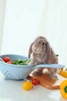 グレーのロップイヤーウサギとミニトマト