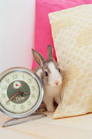 時計とクッションの間のミニウサギ