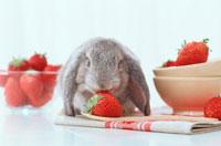 苺とロップイヤーウサギ