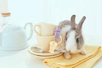 ティーセットとウサギ