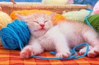 毛糸玉を枕にして眠っている子猫