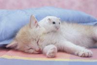 眠る仔猫とハムスター