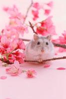 ピンクの花とジャンガリアンハムスター