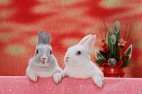 門松とミニウサギ2匹