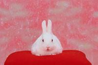 赤い座布団の上の白いうさぎ