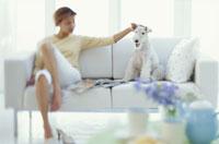 ソファに座る女性と犬(ワイアーフォックステリア)