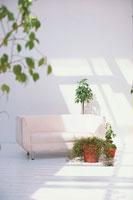 白いソファーと観葉植物