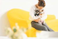 黄色いソファに座りチワワを抱く女性