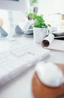 マウスとキーボードと植物