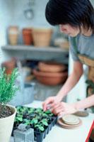 苗の手入れをする女性 21028005718| 写真素材・ストックフォト・画像・イラスト素材|アマナイメージズ