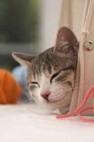 かごから顔を出す猫(雑種)